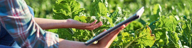 BTS ACSE - Analyse Conduite Stratégie Entreprise Agricole