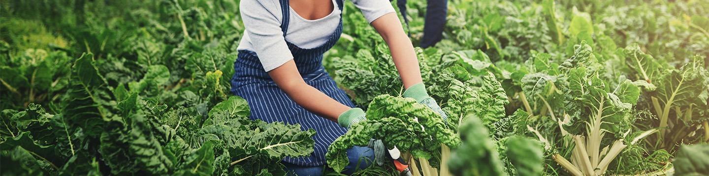 Titre Pro TA - Technicien Agricole